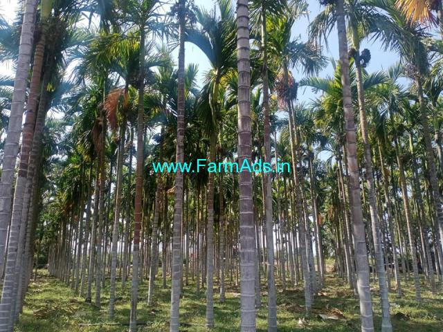 2.29 acres Arecanut plantation for sale Hulithotlu, near Hiriyur