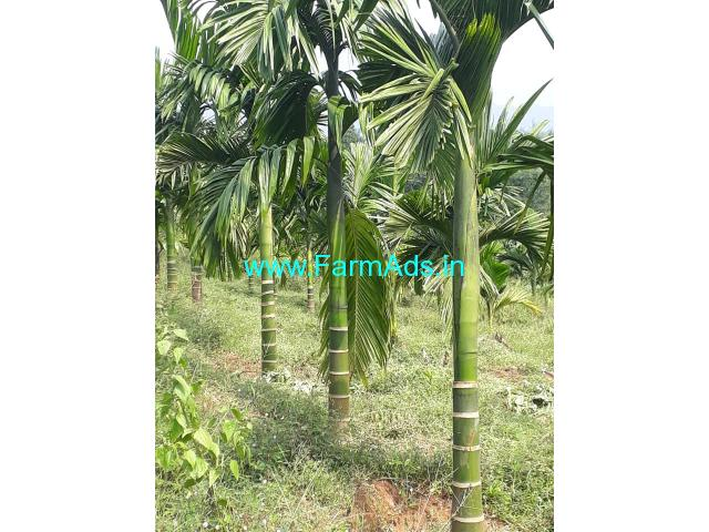 13 acres Agriculture property sale in belthangady naravi road