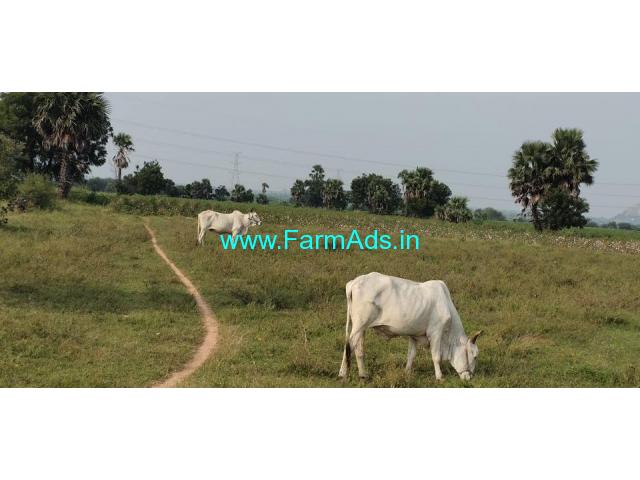 13 Acres agriculture land for Sale in Champur village
