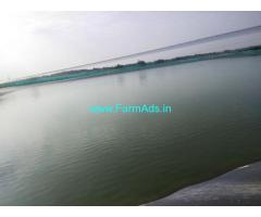 Mango garden and agriculture Land and fish pound for sale at Kadapa