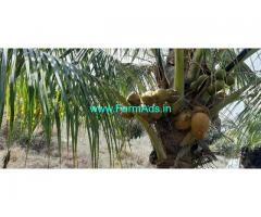 total 6 acre coconut farm for sale at Gundlupete.