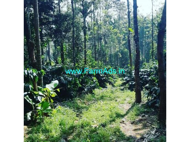 2.5 Acres Areca and Coffee Estate for Sale in Chikmagalur,Balehonnur Road