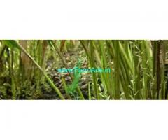 916 Acres agriculture Estate land for sale in Kasaragod