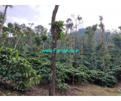 7 Acres Robusta coffee plantation for sale in Mudigere