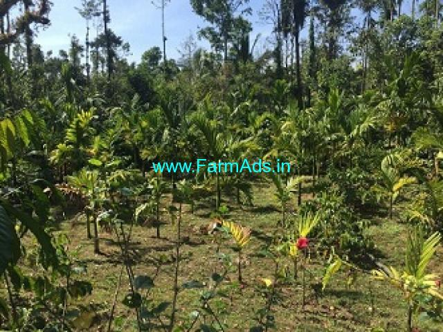 3.3 Acres Coffee Estate for Sale in Mudigere