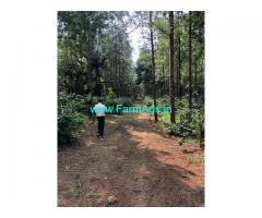6 Acre Arabica Coffee Plantation land with Farm house for Sale Chikmagalur