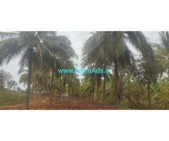7 Acres Coconut and Areca Farm Land for Sale near Yediyur Main Road.