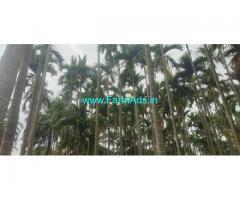 7 Acres Coconut and Areca Farm Land for Sale near Yediyur Main Road.