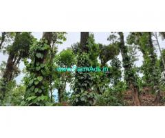 4 Acres Robusta Coffee plantation for sale in Mudigere
