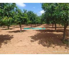 10 Acres Mango Garden for Sale near Aler, Kolanpuka Road
