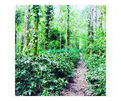 12 acre coffee estate for sale in Chikmagalur