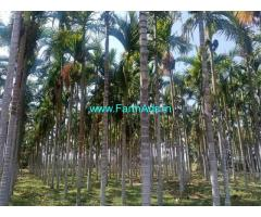 2.29 Acres Arecanut plantation for sale at Hulithotlu