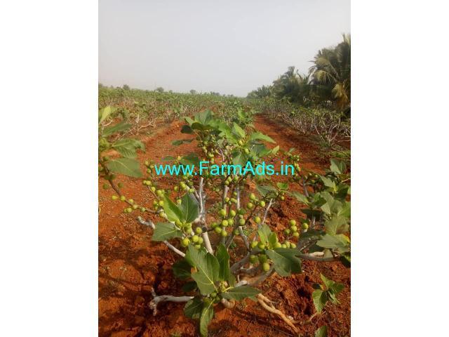 83 acres farm land for Sale near Somalapuram