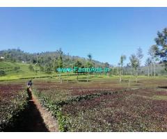 6.50 Acres tea estate for Sale in Kotagiri