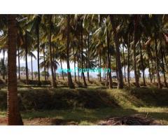 18 Acres Coconuts And Fruits Farm Sale near Aanamalai