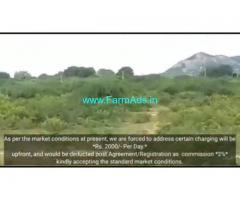 19 Acres 18 Gunta Farm Land For Sale In Challakere