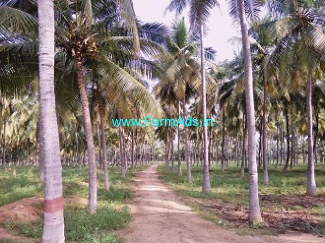 62 Acres Coconut Farm Sale At Thirumoorthi Malai