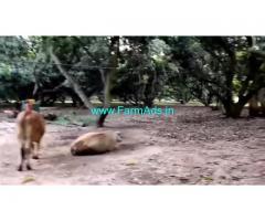 30 Acres Farm Land Sale In Kuvathur