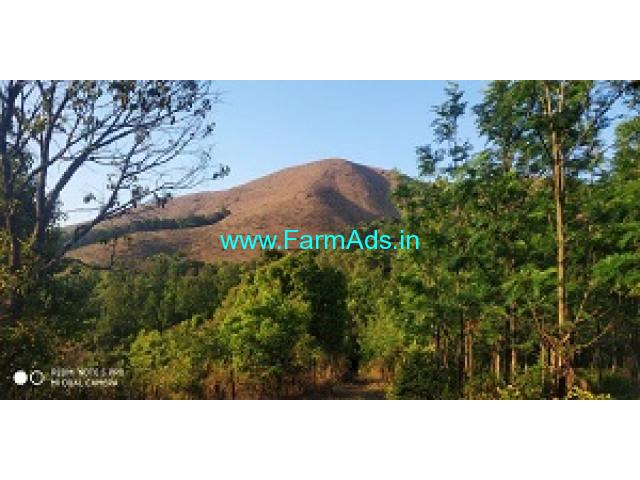 4.35 Acres Newly Planted Arabica Coffee Estate Sale near Bababudangiri
