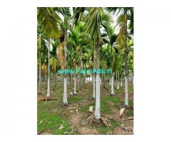 3 Acres Areca nut Plantation for Sale near Ayanur