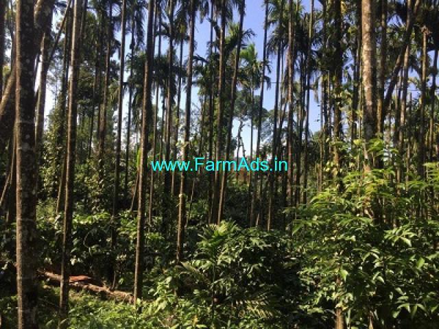 4 acre coffee Areca plantation for sale at Saklehspura Mudigere border