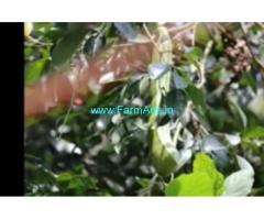 2.26 Acers Farm Land For Sale In Nellyadi