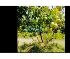 18 Acres Agriculture Land  For Sale In Pollachi