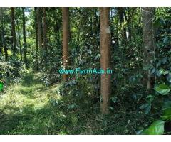 2.5 Acre neglected Coffee plantation sale in Chikmagalur