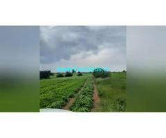 320 Acres Agriculture Land  For Sale In Challakere