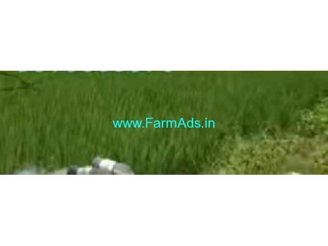 16 Acres Agriculture Land  For Sale In Kottapalli