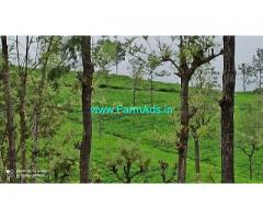 2850 acres of well maintained Tea Estate for sale in Ooty