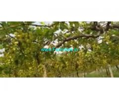 3 Acres Agriculture Land  For Sale In Anantapur