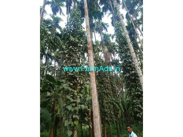 1.10 Acre Patta and 1 Acre kumki land for Sale 8km from Vittal town