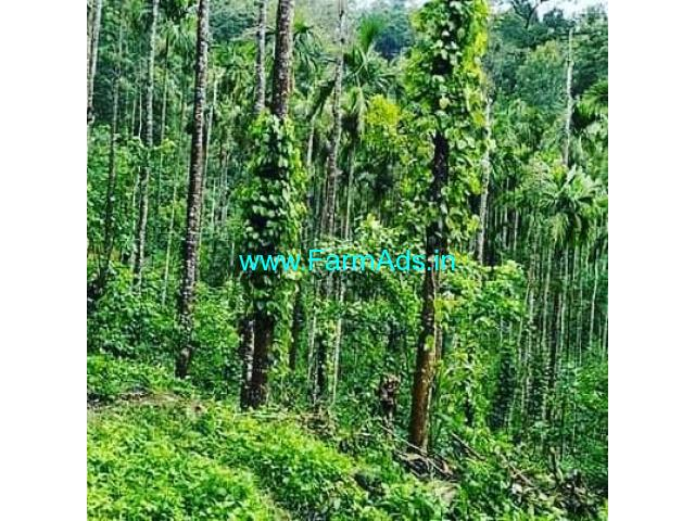 22 Acre Coffee Plantation Land For Sale Chikmaglur