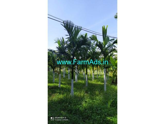 50 acre areca nut Plantation for sale in Chikkamagaluru