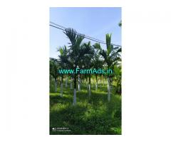 50 acre areca nut Plantation for sale in Chikkamagaluru