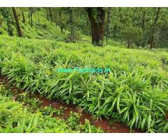 400 acre Coffee estate for sale in Chikkamagaluru