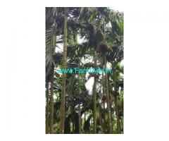 50 Acres Farm Land For Sale In Chikkamagluru