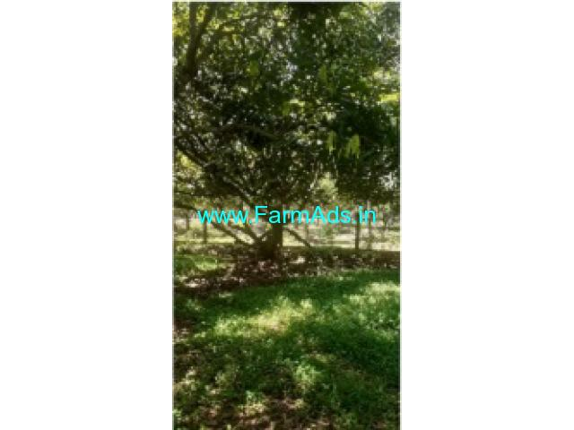 6 Acres Agriculture Land For Sale In Palakkad