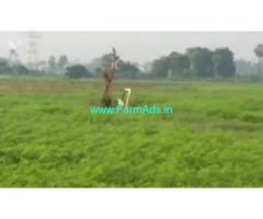 6.25 Acres Farm Land For Sale In Dharmavaram