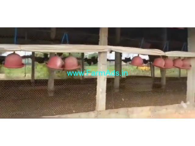 1  Acres Poultry Farm Land For Rent In Guntur