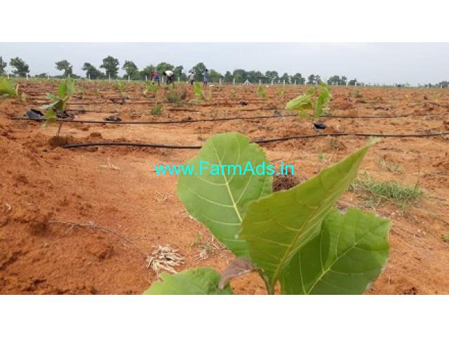 200 Acres Agriculture Land For Sale In Tirunelveli