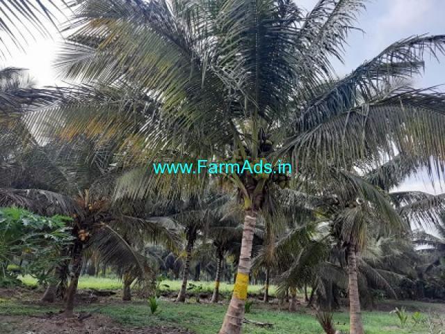 3.50 acres Cocount farm for Sale near Udumalapettai