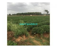 20 Guntas Farm Land For Sale In Doddabalapura