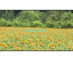 3 Acres 17 Gunta Farm Land For Sale In Sarguru