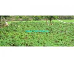 5.09 Acres Farm Land For Sale In Thottam