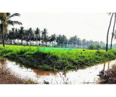 1.7 Acres Farm Land For Sale In Udumalaipetta