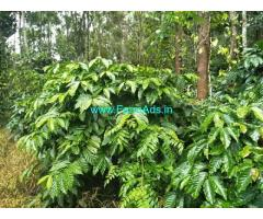 3.5 Acres Agriculture Land For Sale In Chikmagalur