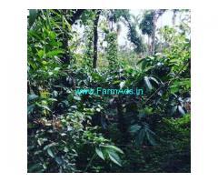 1 Acres 13 Gunta Farm Land For Sale In Mudigere