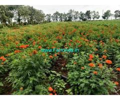 3 Acres Agriculture Land For Sale In Kabini